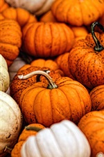 Preview iPhone wallpaper Many pumpkin, vegetable, harvest