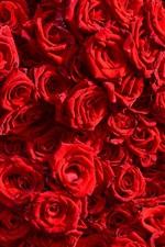 iPhone fondos de pantalla Fondo de muchas rosas rojas, gotas de agua