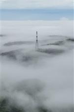Morning, fog, power lines