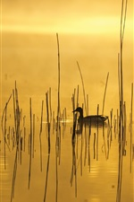 Preview iPhone wallpaper Morning, lake, grass, duck, fog