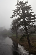 Preview iPhone wallpaper Morning, trees, river, fog