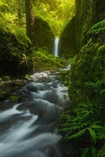 Preview iPhone wallpaper Mossy Grotto Falls, waterfall, trees, fern, green, Oregon, USA