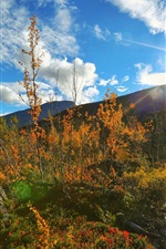 Preview iPhone wallpaper Mountains, trees, creek, sun, blue sky, white clouds, autumn