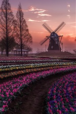 Preview iPhone wallpaper Netherlands, tulips flowers fields, trees, windmill