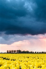 Preview iPhone wallpaper Netherlands, yellow tulips flower field, clouds, sunset