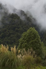 Preview iPhone wallpaper New Zealand, mountains, fog, morning, nature landscape