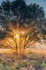 Preview iPhone wallpaper Nijverdal, Netherlands, morning, tree, grass, sun rays