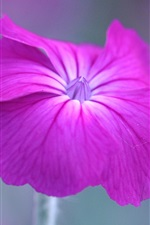 Preview iPhone wallpaper One pink petunia flower