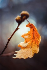 Preview iPhone wallpaper One yellow leaf macro photography, autumn