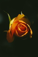Preview iPhone wallpaper Orange rose, black background