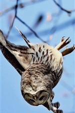 Preview iPhone wallpaper Owl flight down from tree