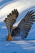 Preview iPhone wallpaper Owl, wings, snow