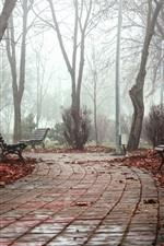 Park, bench, path, trees, fog, morning