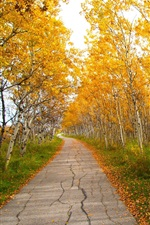 Preview iPhone wallpaper Park, birch, trees, path, yellow leaves, autumn