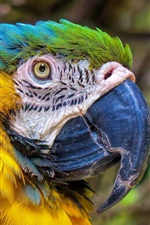 Preview iPhone wallpaper Parrot look back