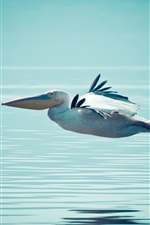 Preview iPhone wallpaper Pelican flying on water surface