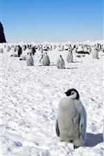 Preview iPhone wallpaper Penguin, antarctica, snow