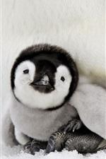 Preview iPhone wallpaper Penguin baby