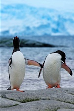 Preview iPhone wallpaper Penguins, couple, antarctica
