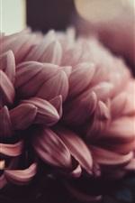 iPhone壁紙のプレビュー 牡丹の花、花弁