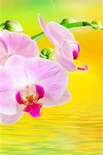 Phalaenopsis, flores, água