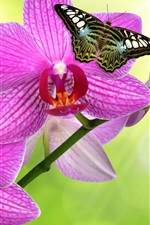 Preview iPhone wallpaper Phalaenopsis pink flowers, butterfly