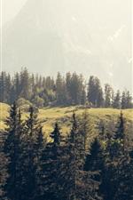 iPhone fondos de pantalla Pinos, bosques, montañas