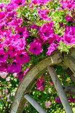 Preview iPhone wallpaper Pink petunias, cart, garden