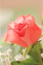 Preview iPhone wallpaper Pink rose, fuzzy background
