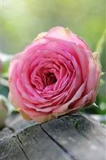 Preview iPhone wallpaper Pink roses, flowers, wood, bokeh