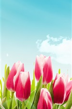 Preview iPhone wallpaper Pink tulips, flowers, blue sky, clouds