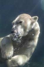 Полярный медведь плавает под водой