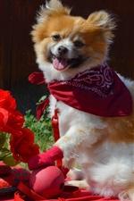 Puppy e flores vermelhas