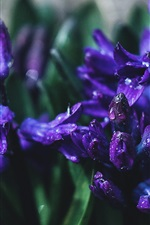 Preview iPhone wallpaper Purple flowers, water drops