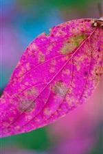 Preview iPhone wallpaper Purple leaf, bokeh