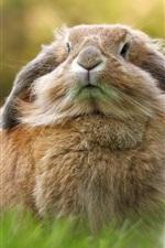 Preview iPhone wallpaper Rabbit, grass, bokeh