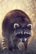 Preview iPhone wallpaper Raccoon walk in the grass, bushes