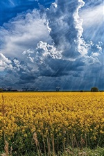 Preview iPhone wallpaper Rapeseed flowers field, clouds, sun rays