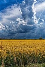 iPhone壁紙のプレビュー 菜の花花畑、雲、太陽の光線