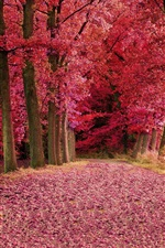 Red leaves forest, trees, autumn, path