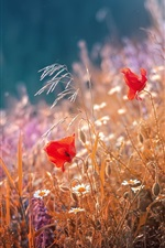 Preview iPhone wallpaper Red poppies flowers, grass, summer