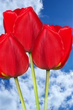 Preview iPhone wallpaper Red tulips, sky, clouds, sun