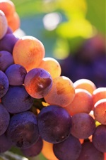 Preview iPhone wallpaper Ripe grapes, fresh fruit