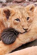 Preview iPhone wallpaper Sadness lion cub
