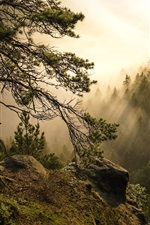 Preview iPhone wallpaper Saxon Switzerland National Park, trees, sun rays, Germany