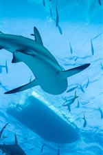 Preview iPhone wallpaper Shark, diving, blue sea, water, underwater