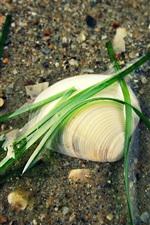 Shell, grass, water