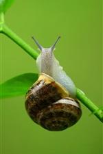 Preview iPhone wallpaper Snail, grass, stem