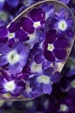 Preview iPhone wallpaper Spoon, blue purple flowers, petals