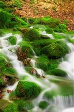 Stream, moss, forest